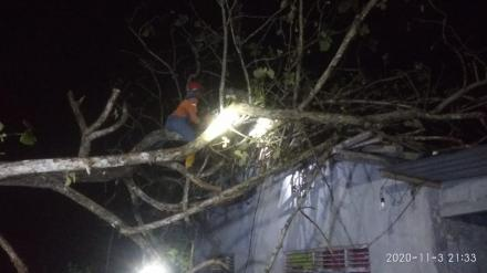 Pohon Tumbang di Dusun Kabrokan Wetan Menimpa Rumah Warga